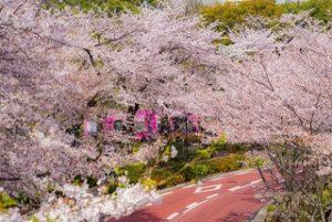 東京ミッドタウン 桜並木