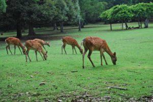 奈良公園 鹿 ディアライン