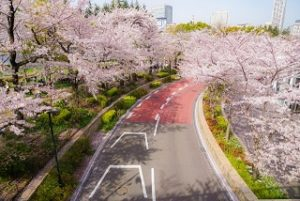 東京ミッドタウン さくら通り 桜