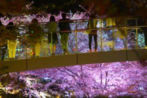 歩道橋 夜桜 東京ミッドタウン