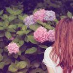 白山神社の文京あじさいまつり2019!見頃や開花は?時間やランチは?