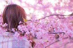 箱根 桜 満開