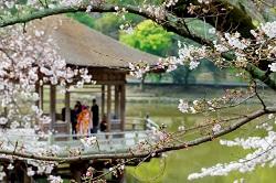 奈良公園 桜 見どころ