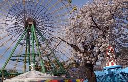 華蔵寺公園 桜まつり