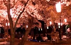 ライトアップ 夜桜
