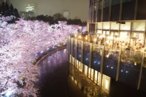 東京ミッドタウン 夜桜 レストラン