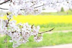 幸手桜まつり イベント