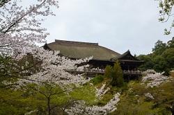 京都清水寺 桜