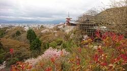 京都清水寺 混雑