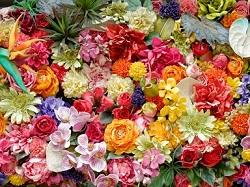 お花 ドライフラワー