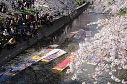 岩倉桜まつり イベント