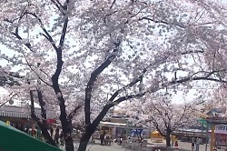 華蔵寺公園 アクセス