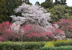 吉高の大桜 アクセス