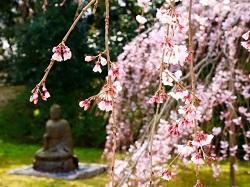 醍醐寺 お花見スポット