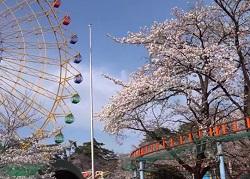 華蔵寺公園 駐車場