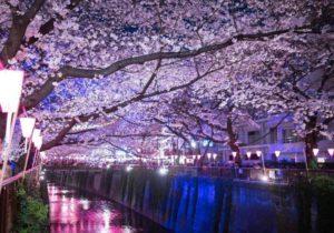 目黒川 夜桜 ライトアップ