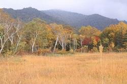 尾瀬の紅葉と草紅葉 風景