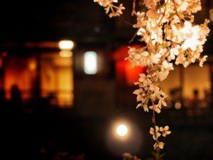 夜桜 お店