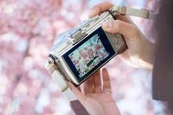 華蔵寺公園 桜 情報