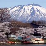 高松の池(高松公園)の桜2019!見頃や桜まつりは?ライトアップは?