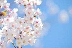 お花見スポット 清水公園