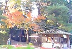 平安神宮 紅葉 見どころ