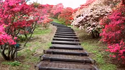 笠間 つつじ 山頂への階段