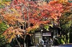 平安神宮 人気 紅葉