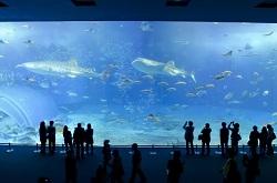 水族館 カップル 夫婦