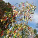 願い事短冊がたくさん飾られた大きい笹の木