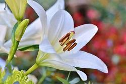 お花 おすすめ 関西