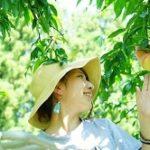 大阪近郊の桃狩り人気おすすめランキング2019!時期や食べ放題は?