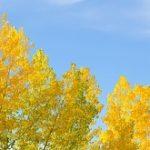 【秋めく・秋めいた】の意味と時期!使い方や俳句は?類語は?
