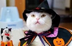 ハロウィンコスプレをした猫
