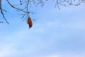 冬の空 落ちそうな枯れ葉