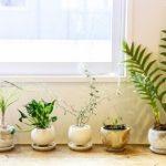 育てやすい!室内観葉植物人気ランキング!初心者におすすめは?