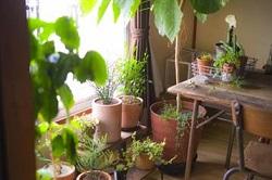 室内 日陰 観葉植物