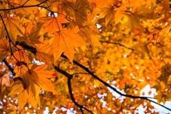 秋 見つける チャンス