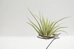 手間なし 観葉植物