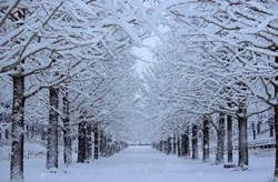 雪に覆われた並木道