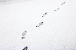 降り積もった雪に残る足跡