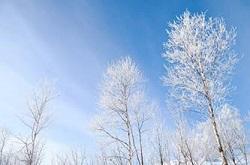 冬の青空 雪をかぶった木々