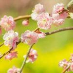 【春めく・春めいた】の意味と時期!使い方や俳句は?類語は?