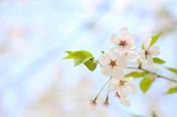 春めく 春めいた 意味