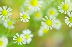 春めく 季語 俳句