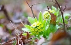 芽吹き 春